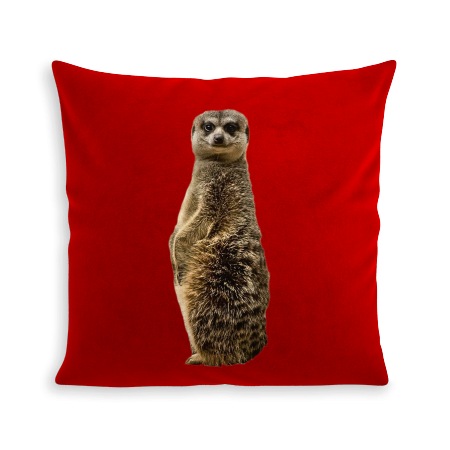 COUSSIN SURICATE