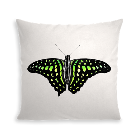 COUSSIN GREEN BUTTERFLY