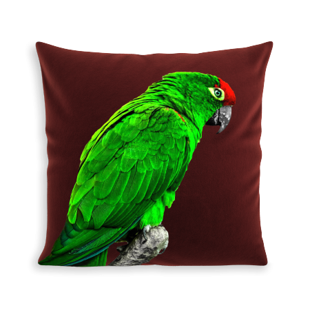 COUSSIN GREEN PARROT