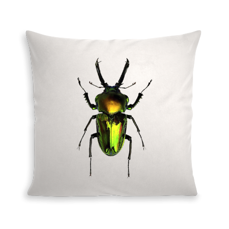 COUSSIN INSECT V