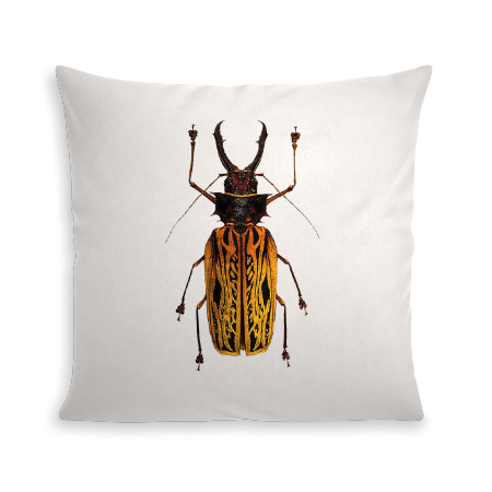 COUSSIN INSECT VIII