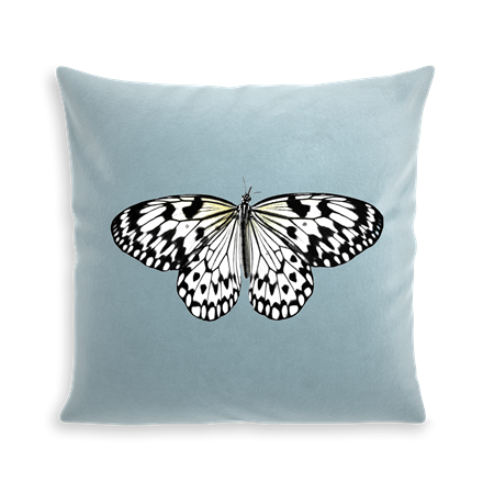 COUSSIN WHITE BUTTERFLY
