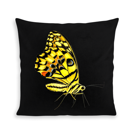 COUSSIN YELLOW BUTTERFLY