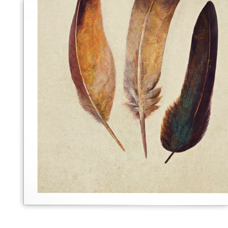 Art-Poster - Three feathers - Terry Fan
