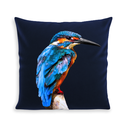 COUSSIN LITTLE BLUE BIRD