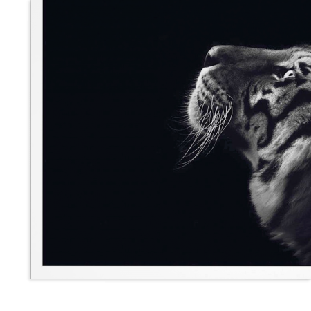 ART POSTER TIGER BLACK AND WHITE